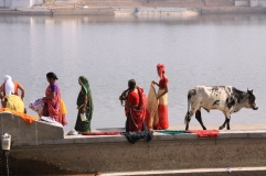 Mujeres en el lago sagrado de Pushkar, India.